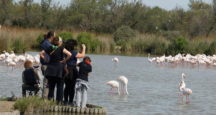 Famille prenant en photo des flamants roses au Parc Ornithologique du Parc de Gau en Camargue